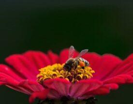 Por qué los veganos no comen miel